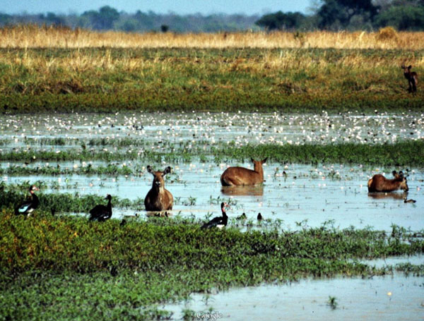 the manovo gounda saint floris national Manovo-gounda st floris national park source: tripbucket located on the border between the central african republic and chad, the manovo-gounda national park is one of the finest places in the country to see wildlife.