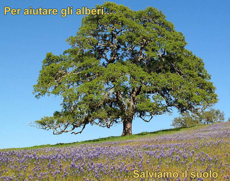 Salviamo alberi e suolo articoli geografia - Alberi adatti per viali ...